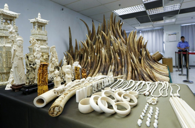 4_Hong Kong will shut down legal ivory trade