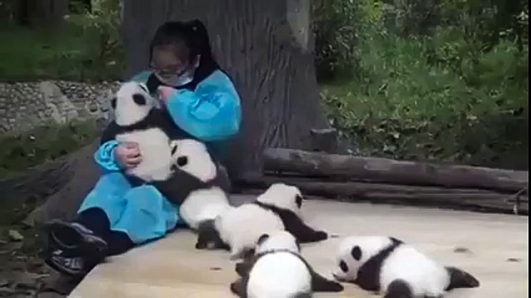 4_get paid $32,000 to cuddle with baby pandas all day