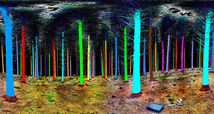 0_3D forestry