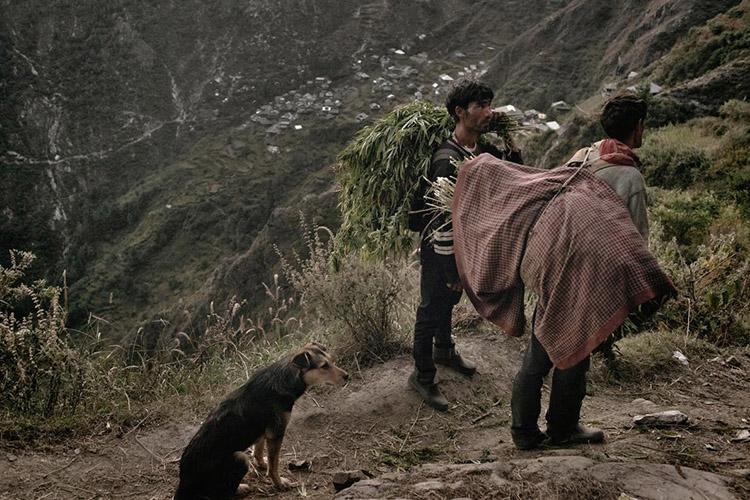 2_Himalayan cannabis village