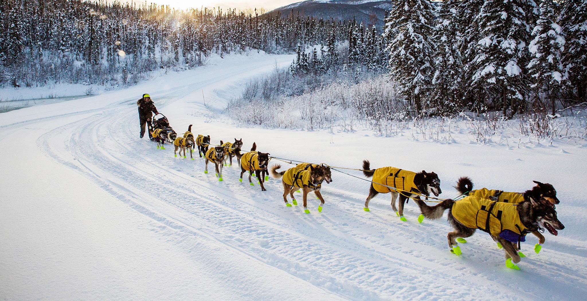 Zebra Race The toughest sled dog ...