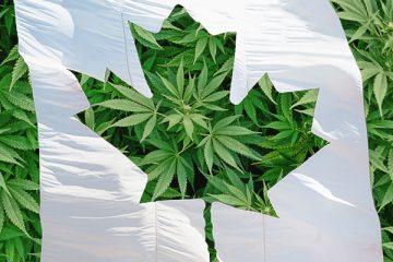 1_Canada's Cannabis Future