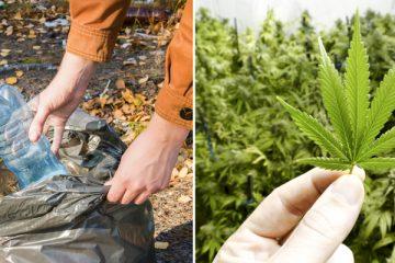 1_Colorado Weed Club (1 of 1)