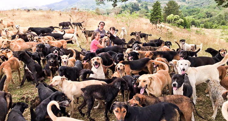 3_Costa Rica's Land of the Stray Dogs