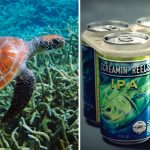 Our drinking habits kill 100,000 marine animals a year, and this brewery's going to save them.