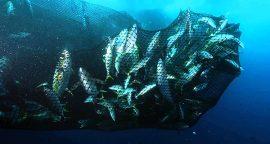 1_greenpeace tuna company