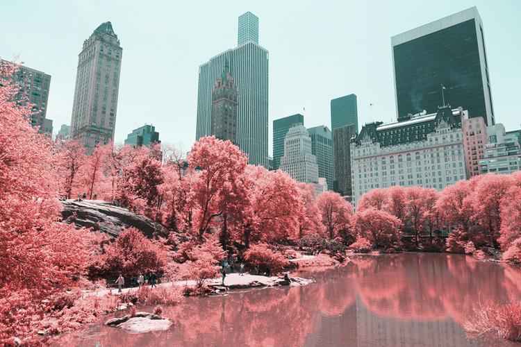 6_Central Park Infrared