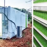 Shipping container farm lets city dwellers grow an acre of greens in their own backyard