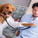 """Early detection of cancer and diabetes is being """"sniffed out"""" by a crew of medical dogs"""