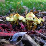 An eye-opening trip on mushrooms could help you quit smoking
