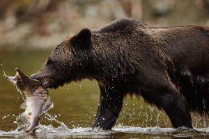 bear28