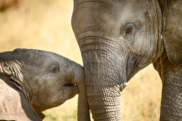 China-is-banning-ivory-trade-by-the-end-of-2017