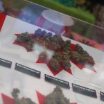 Canadians have found a loophole that lets Americans legally buy weed