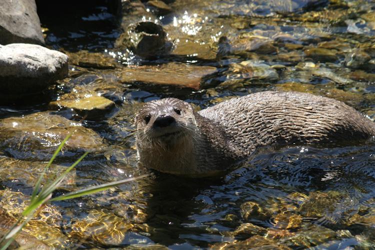 cute sea otters