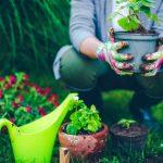 Eco-garden: how to garden organic
