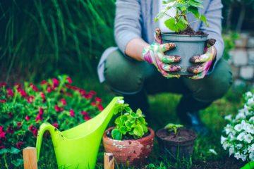 eco gardening tips