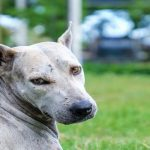 Study shows that dogs judge the morality of their owners