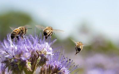 Antibiotic Honeybees 2