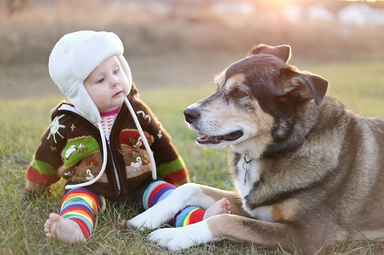 Baby Dog Allergy 1