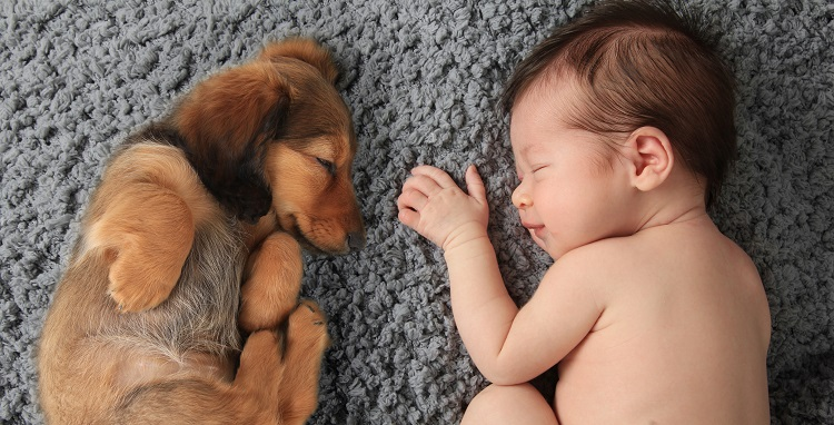 Baby Dog Allergy 2