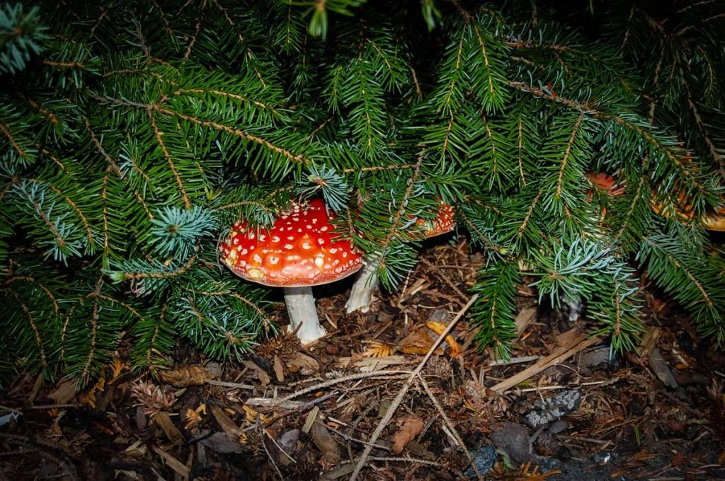 Siberian Mushroom Shamans Santa Claus_2