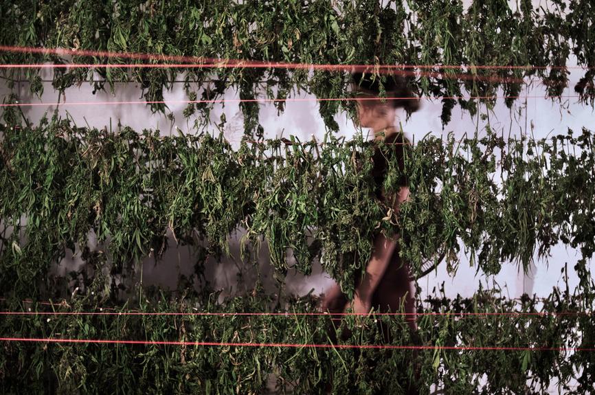 secret marijuana growers_1