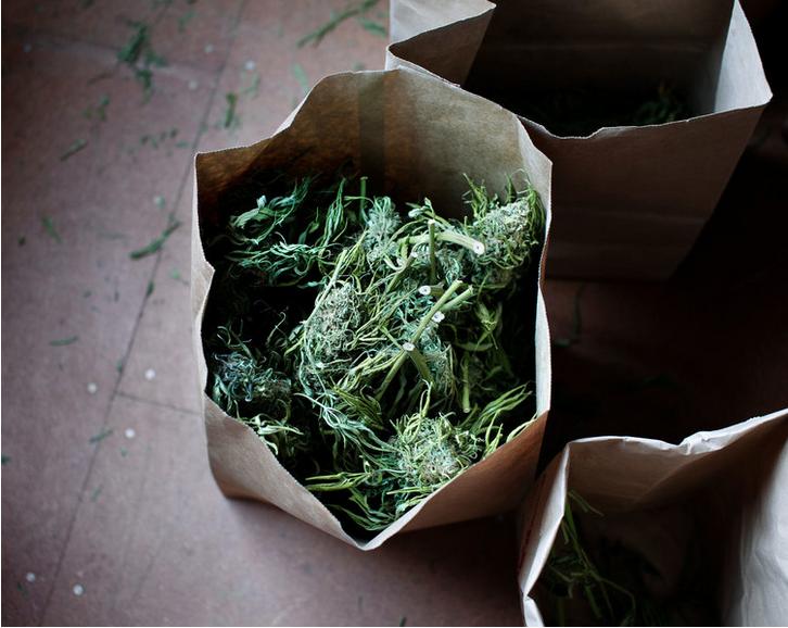 secret marijuana growers_4