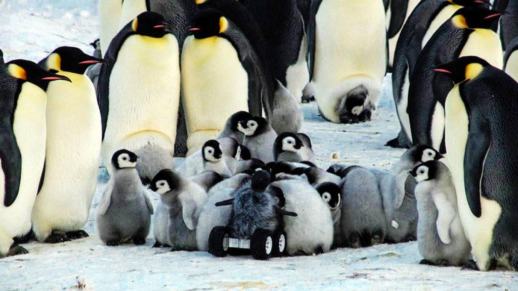 Baby-Penguin-Robot