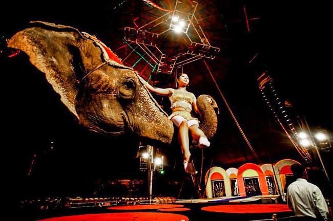 3_Circus animals