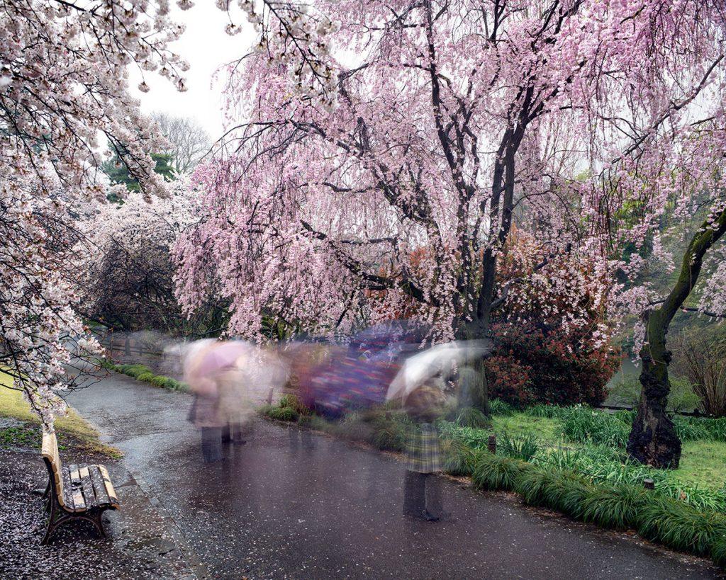 Hanami_18_shinjuku_rain