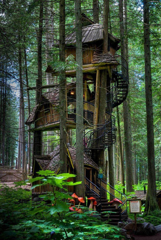 3_tree houses
