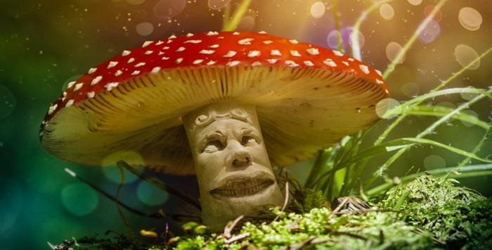 5_magic mushrooms
