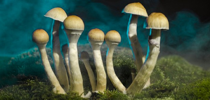 magic mushrooms_1