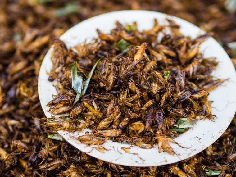 cricket-meat