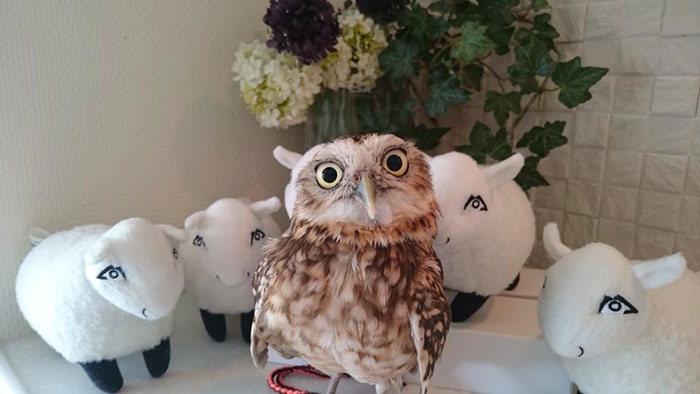10_drunk with owls