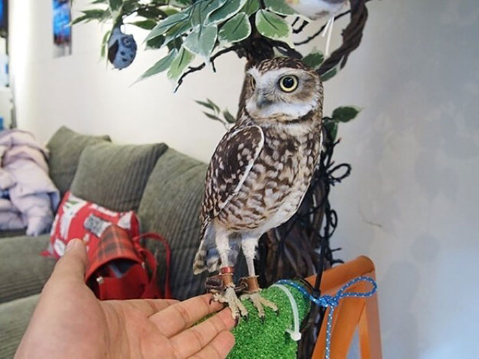 5_drunk with owls