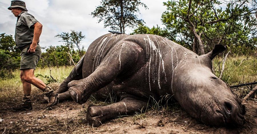 2Kinessa-Johnson-kills-endangered-animal-poachers