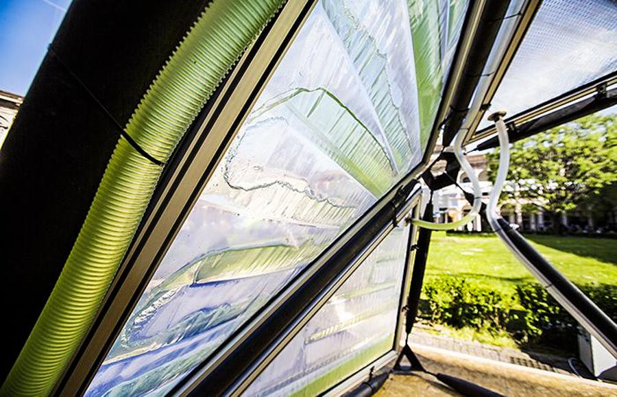 4_urban algae canopy