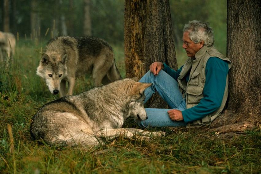 4_wild wolves