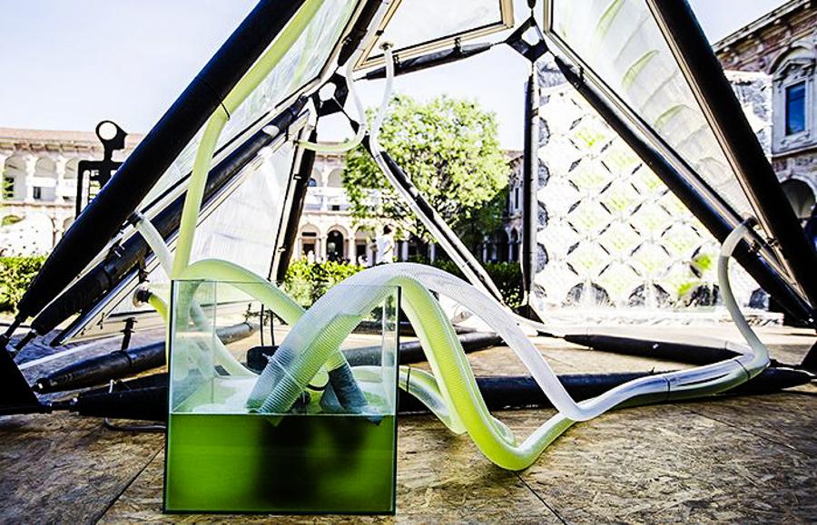 5_urban algae canopy