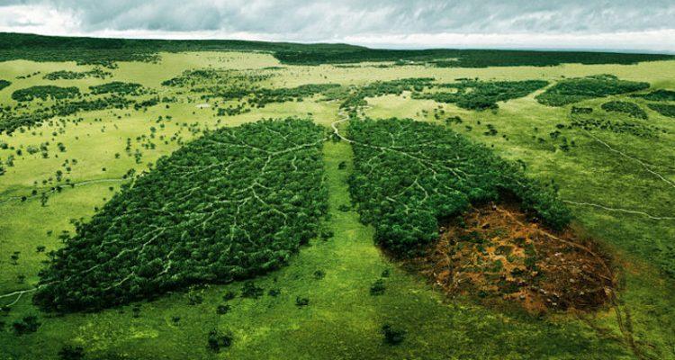 Risultati immagini per Earth's sixth mass extinction