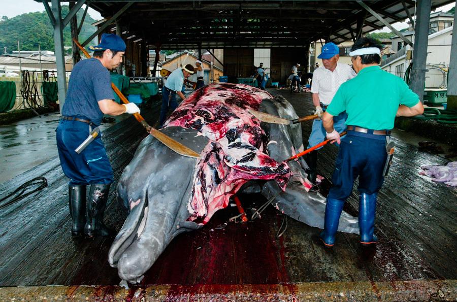 2_Japans-whale-killing-industry