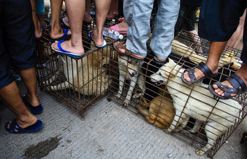 2_Yulin Dog Meat Festival