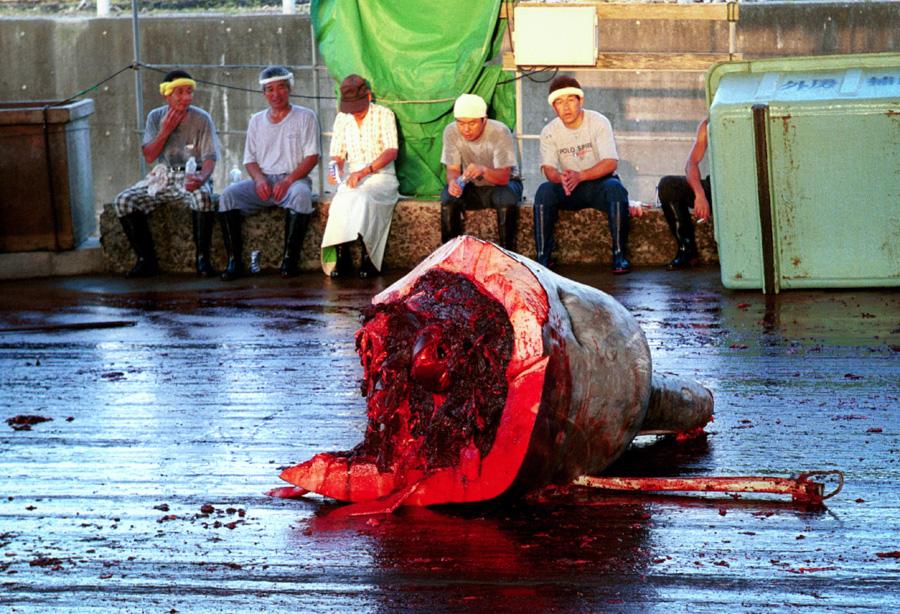 4_Japans-whale-killing-industry