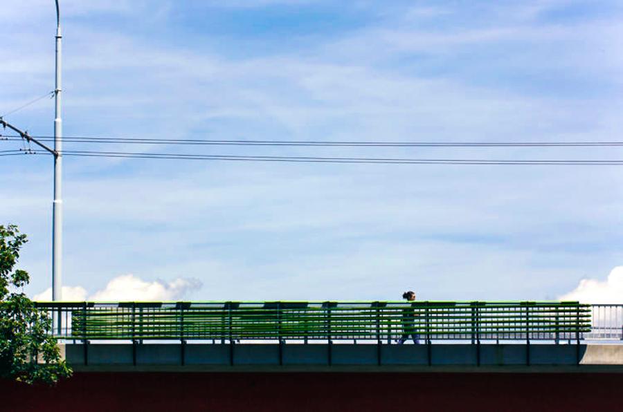 5_Algae eats highway pollution