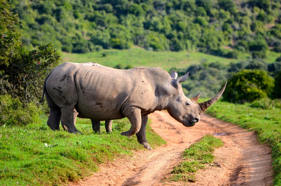 5_fake rhino horns