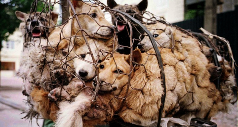 7_Yulin Dog Meat Festival