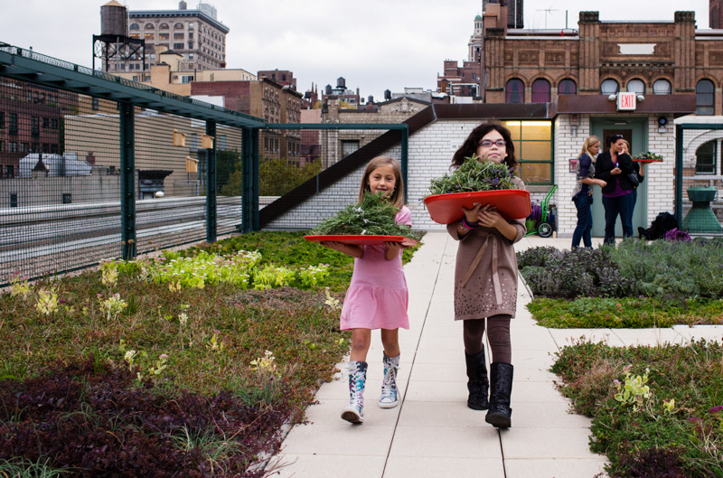 7_solar green roofs NYC
