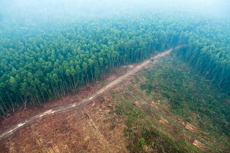 3_deforestation of the planet