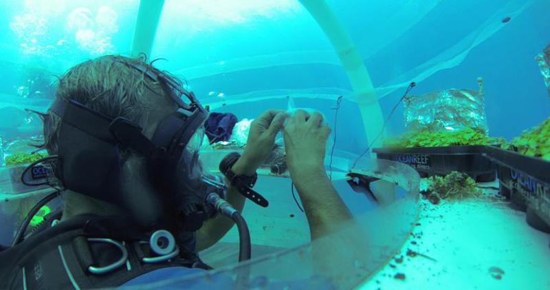 4_underwater greenhouse